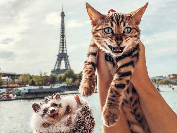 Si landak Herbee dan kucing Audree senang menghabiskan waktu dengan jalan-jalan keliling dunia. Mereka pernah ke Menara Eiffel loh. (mr.Pokee/Instagram)