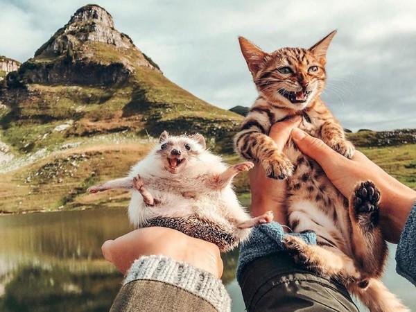 Petualangan kedua hewan ini dibagikan lewat media sosial. Banyak pengikut yang terkesan dengan momen perjalanan mereka. (mr.Pokee/Instagram)