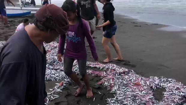 Ikan-ikan kecil terdampar di pesisir Pantai Pesinggahan Klungkung, Bali, Jumat (29/5/2020).