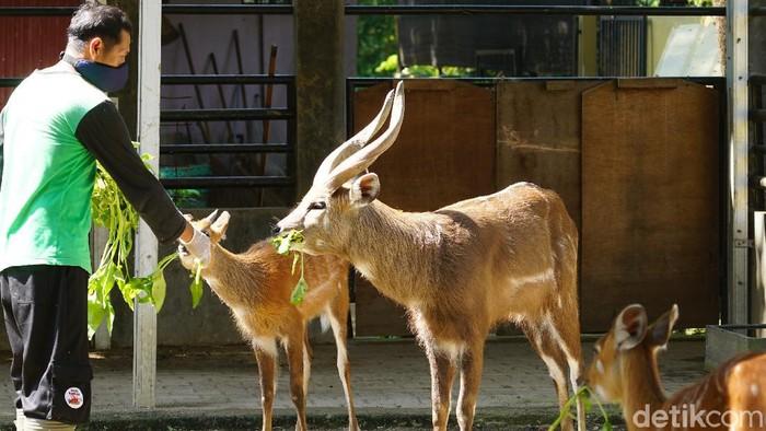 Taman Satwa Taru Jurug (TSTJ) atau Solo Zoo, Minggu (31/5/2020).