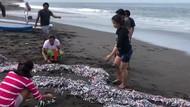 Heboh Ikan Kecil Terdampar di Pesisir Pantai Klungkung Bali