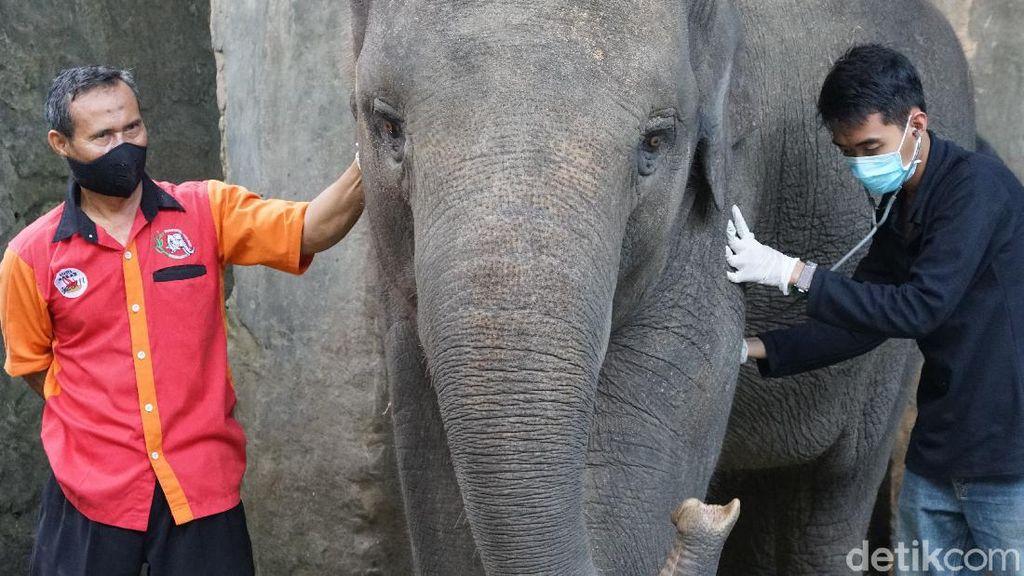 Pengelola Solo Zoo Gelar Simulasi Beroperasi di Era New Normal