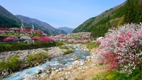 Kiat Objek Wisata dan Agen Travel Jepang Hadapi New Normal