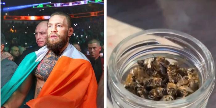 Conor McGregor Makan Lebah