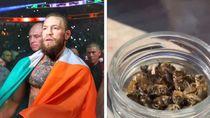 Heboh Petarung Conor McGregor Makan Lebah yang Ternyata Menyehatkan