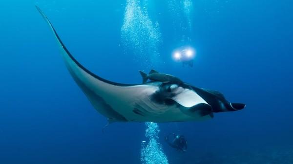 Laut Cortez juga dikenal sebagai Teluk California. Seorang penyelam, Jacques Cousteau menyebutnya sebagai akuarium dunia.Ada lebih dari 800 spesies ikan di sini, termasuk pari manta, hiu paus hingga lumba-lumba.