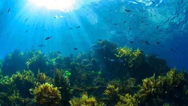 Para penyelam berada di bawah air Poor Knights Islands akan melihat kumpulan puncak gunung berapi yang menjorok dari dasar laut di lepas pantai Pulau Utara, New Zealand. Di sana ada hutan rumput laut yang lebat. Ada campuran air hangat dan dingin di sini.
