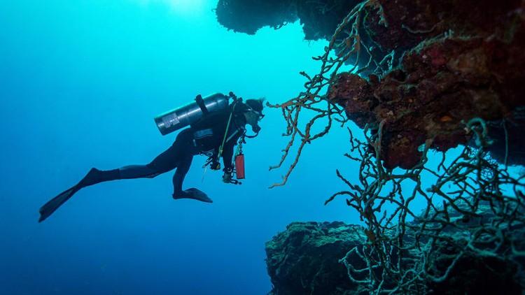 Destinasi menyelam terbaik