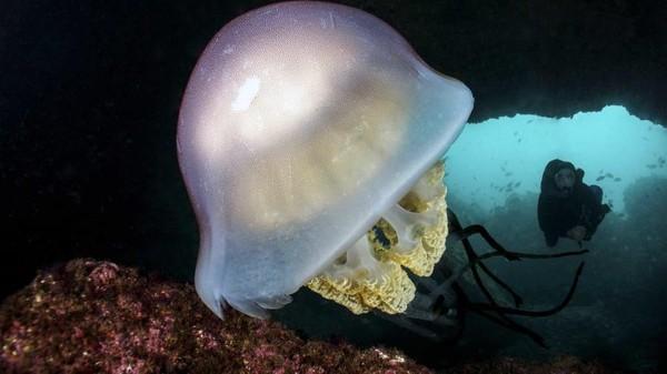 Situs penyelaman Portugal di Sesimbra. Anda dapat menemukan gurita dan karang dipenuhi anemon. Inilah destinasi menyelam terbaik di Eropa.
