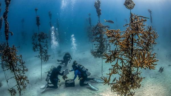 Key Largo salah satu destinasi menyelam terbaik dan paling mudah diakses di Amerika Serikat. Bergabunglah wisata edukasi bersama Coral Restoration Foundation dan menjadi bagian dari kelompok restorasi terumbu karang terbesar di dunia.