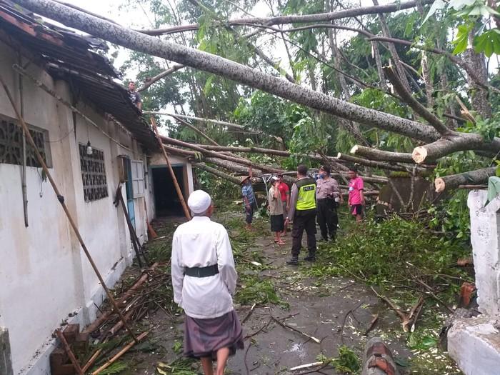 Diterjang Angin Kencang 11 Rumah dan Satu Mobil Tertimpa Pohon Roboh