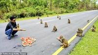 Antre Makanan, Gerombolan Monyet Ikut Social Distancing