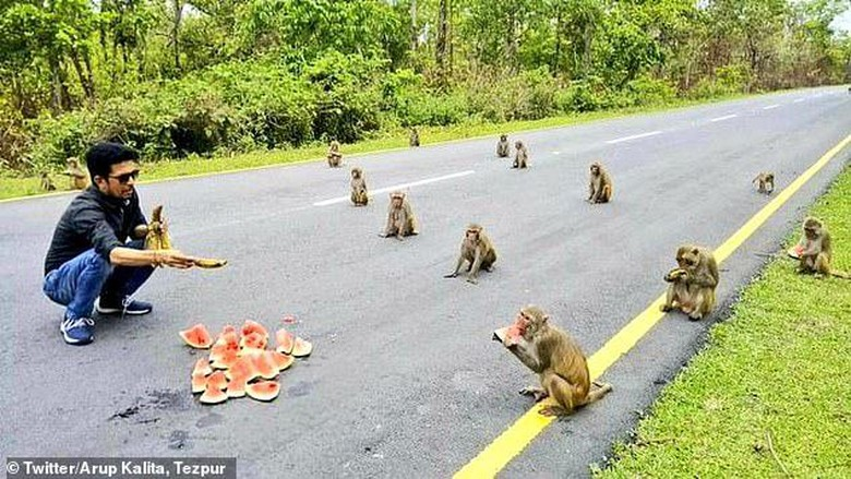 Gerombolan monyet Social Distancing di India.