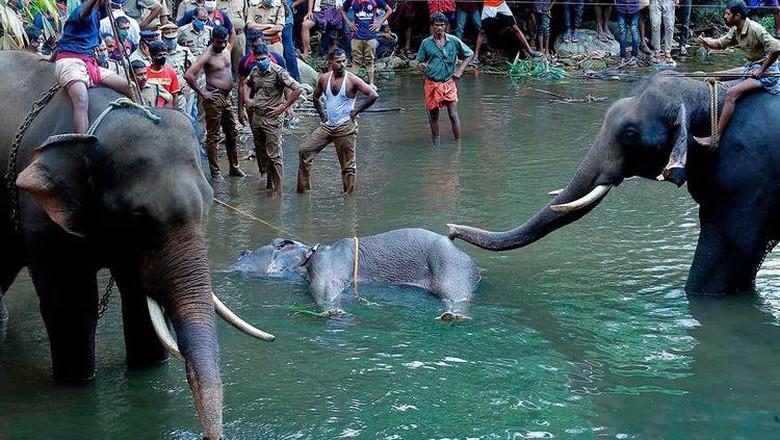 Gajah mati di India