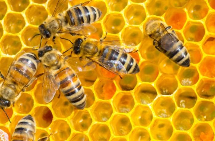 Hasil kerja lebah yang dapat dikonsumsi