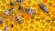 Sarang dan Royal Jelly, 5 Hasil Kerja Lebah yang Kaya Nutrisi