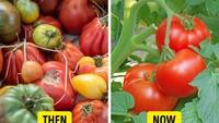 5 Buah dan Sayur Ini Punya Bentuk Berbeda dari Saat Pertama Ditemukan