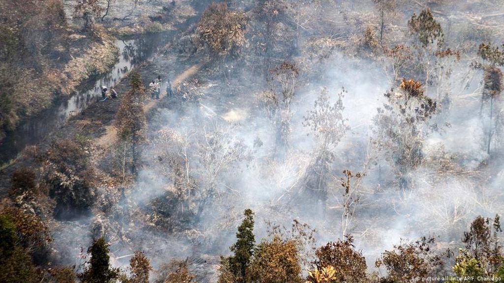 Studi: Indonesia Berhasil Tekan Deforestasi, Tapi Masih Tiga Besar Dunia