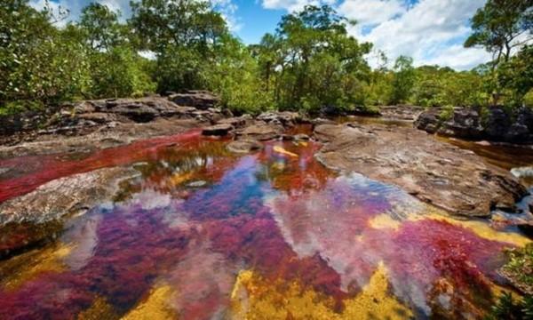 Ada warna kuning, hitam, merah, hijau dan biru yang menghiasi aliran sungai. Karena fenomena 5 warna ini, sungai ini juga dijuluki Sungai Pelangi. Selain itu, juga ada julukan Sungai yang Mengalir dari Surga, Sungai Lima Warna dan Pelangi yang Mencair. Istimewa/dok.ikons.id