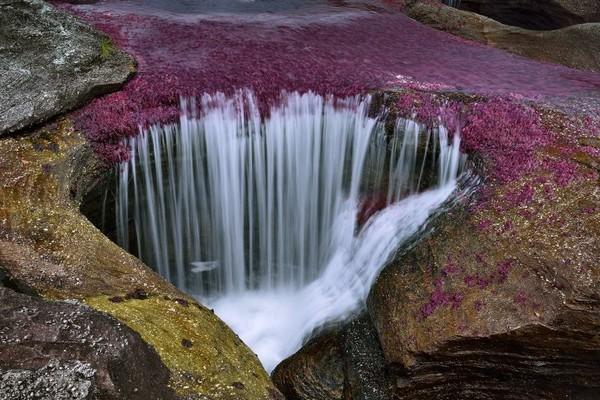 Adapun waktu terbaik untuk datang dan menikmati keindahan sungai ini yaitu Juli-Desember. Di saat musim panas inilah, alga dan lumut tumbuh semakin banyak dengan warna yang beragam. Istimewa/dok.enaknyakemana.com