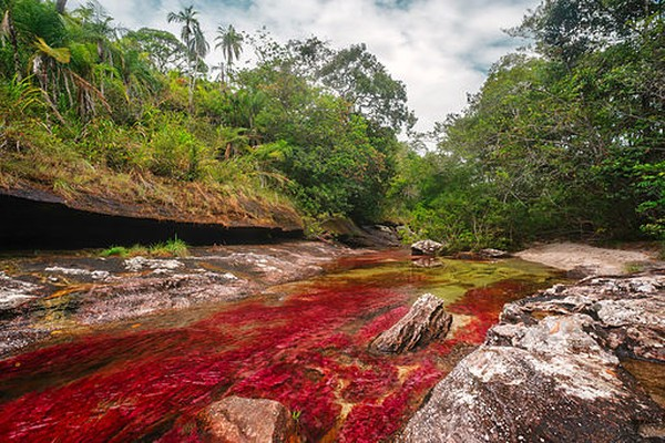 Pemandangan di sini sangatlah unik dan indah. Kamu akan melihat sungai ini memiliki lima warna cerah. Sejatinya, warna ini bukanlah dari aliran air, namun karena lumut yang tumbuh di dasar sungai. Istimewa/Mario Carvajal/pospopulers.blogspot.com
