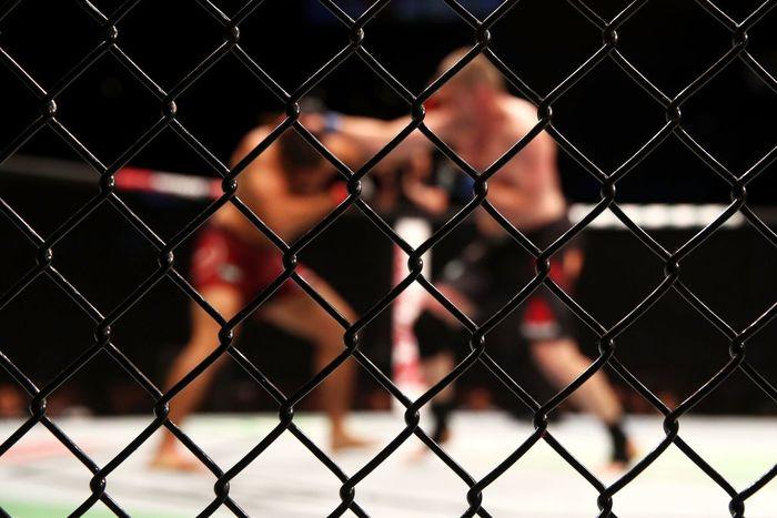 Ilustrasi UFC