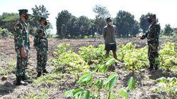 Antisipasi Rawan Pangan di Masa COVID-19, Ini yang Dilakukan Prajurit Marinir