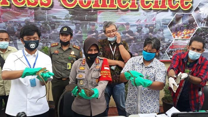 Polisi gagalkan penyelundupan reptil