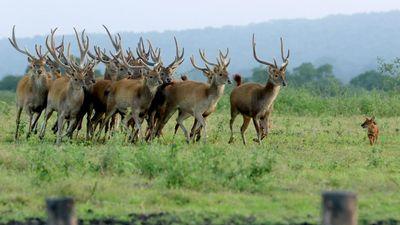 Dampak Pandemi Corona di Taman Nasional Baluran