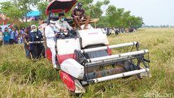 Pandemi Corona, Mentan: Sektor Pertanian Harus Segera Bangkit
