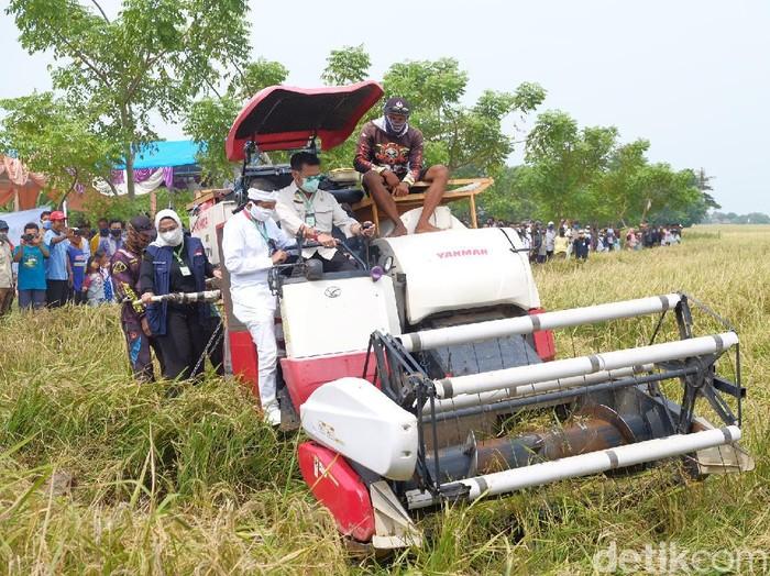 Menteri Pertanian Syahrul Yasin Limpo memanen padi menggunakan alat pemanen saat panen raya di Cilamaya Karawang.