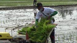 Genjot Masa Tanam Padi untuk Hadapi Corona-Kemarau Panjang