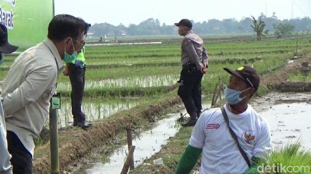 Petani di Subang