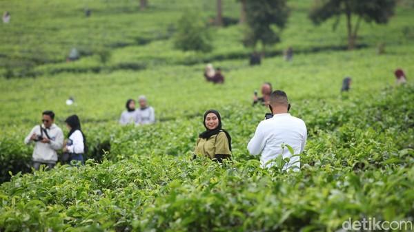 PSBB di Kabupaten Bogor ini diketahui tengah dalam fase PSBB parsial, yakni sebagian wilayah yang memiliki kasus besar tetap diwaspadai.