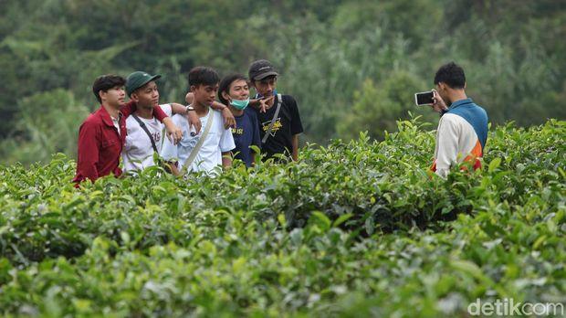 Kawasan Puncak, Bogor, Jawa Barat, mulai ramai dipadati wisatawan. Padahal Pemkot Bogor kembali memperpanjang PSBB di masa transisi selama satu bulan kedepan.