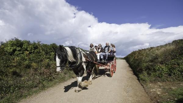 Yang unik lagi dari pulau Sark adalah di sana tidak ada mobil. Ya, mobil dilarang di Sark. Adanya gerobakl yang ditarik sapi, seperti di Gili Trawangan. (Getty Images/BrettCharlton)