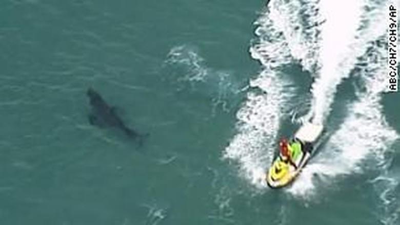 Pria Australia tewas digigit hiu putih
