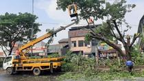 Pohon Tumbang di Jalan Margonda Depok Saat Hujan Deras Siang Tadi