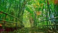 Hutan bambu ini bukan di Kyoto, Jepang. Hutan bambu ini tumbuh secara alami di Kawasan Bukit Mbah Garut. Lokasinya ada di Kelurahan Cisurupan, Kecamatan Cibiru, Kota Bandung.