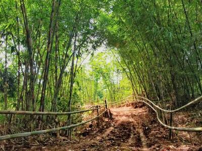 Foto: Hutan Bambu ala Kyoto Jepang, Tapi Ini di Bandung
