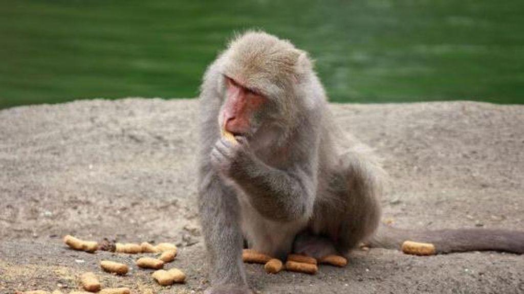Ludah Monyet dan Taco Jadi Varian Kopi yang Nyleneh