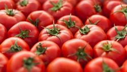 Istimewa! Merah Merona Tomat Rekayasa Genetika Ini Lebih Kaya Nutrisi