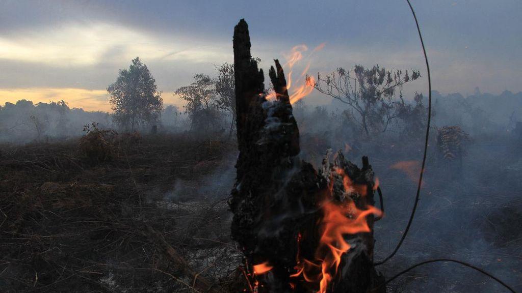 Potret Kebakaran Lahan Gambut di Aceh Barat