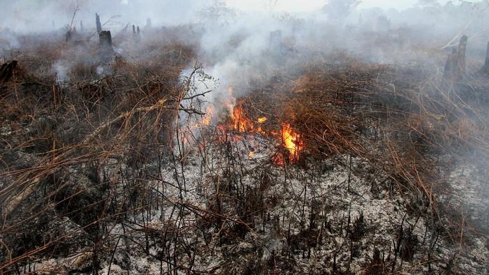 Kobaran api menyala dari lahan gambut yang terbakar di Desa Peunaga Cut Ujong, Meureubo, Aceh Barat, Aceh, Rabu (10/6/2020). Kebakaran lahan gambut yang terjadi sejak sepekan terakhir terus meluas yang diakibatkan angin kencang disertai suhu udara panas. ANTARA FOTO/Syifa Yulinnas/foc.