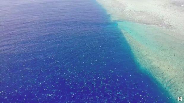 Penyu di Great Barrier Reef