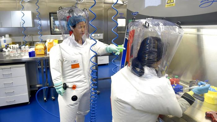 FILE - In this Thursday, Feb. 23, 2017 file photo, Shi Zhengli works with other researchers in a lab at the Wuhan Institute of Virology in Wuhan in central Chinas Hubei province. On Dec. 30, 2019, Wuhan health officials issued an internal notice warning of an unusual pneumonia, which leaked on social media. That evening, Shi, famous for having traced the SARS virus to a bat cave, was alerted to the new disease, according toan interview with Scientific American. Shi took the first train from a conference in Shanghai back to Wuhan. (Chinatopix via AP)