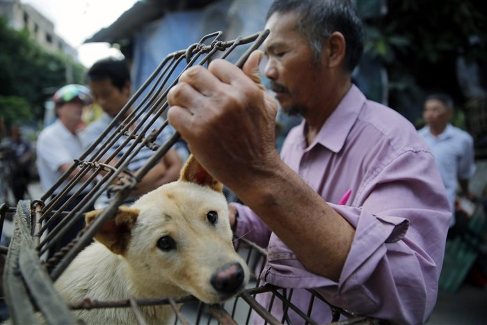 Vendors wait for customers to buy dogs in cages at a market in Yulin, in southern Chinas Guangxi province on June 21, 2015.  The city holds an annual festival devoted to the animals meat on the summer solstice which has provoked an increasing backlash from animal protection activists.      CHINA OUT    AFP PHOTO        (Photo credit should read STR/AFP/Getty Images)