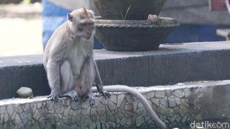 Monyet di Taman Balekambang, Solo.