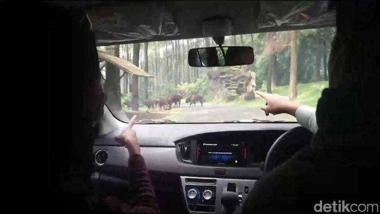 Taman Safari Prigen simulasi new normal