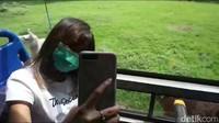 Selain itu protokol kesehatan juga berlaku di bus safari, dimana penumpang harus menjaga jarak dengan duduk di bangku dekat kaca, dilarang mengobrol, dan bus langsung dibersihkan setelah tur. Foto: (Muhajir Arifin/detikcom)